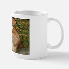 Siberian Husky & Pomeranian Mug