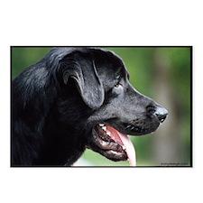 Black Labrador Postcards (Package of 8)