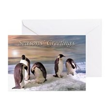 Penguins from Antarctica Greeting Cards (Pk of 10)
