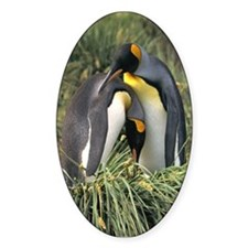 King Penguin Lovers Decal