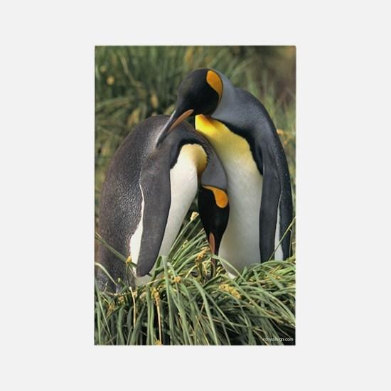 King Penguin Lovers Rectangle Magnet