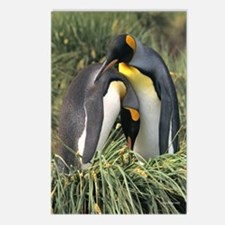 King Penguin Lovers Postcards (Package of 8)