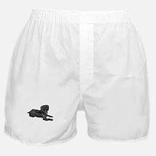 Yorkie Poo Boxer Shorts