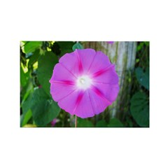 .morning glory. Rectangle Magnet (100 pack)