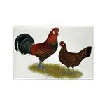 Old English Pheasant Fowl Rectangle Magnet (100 pa