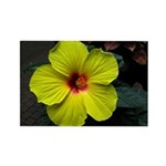 .yellow hibiscus. Rectangle Magnet (100 pack)