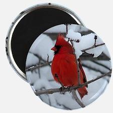 Snow Cardinal Magnet
