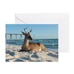 Deer at Inlet Beach Greeting Cards