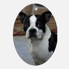 Boston Terrier Ornement(Oval)