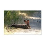 Nap Time Jackrabbit Mini Poster Print