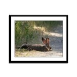 Nap Time Jackrabbit Framed Panel Print