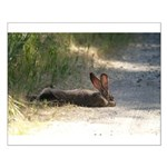 Nap Time Jackrabbit Small Poster
