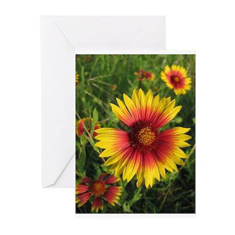 Indian Blanket Wildflower Greeting Cards (Pk o