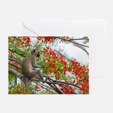 Vervet Greeting Cards (Pk of 10)