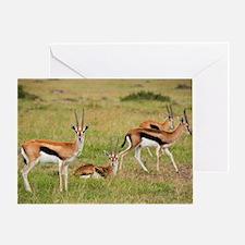 Thomson's gazelles Greeting Card
