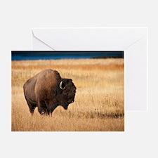 Cute American bison buffalo Greeting Card