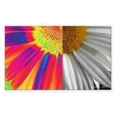 halfway daisy - all color Decal