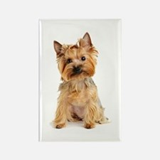 Yorkie Rectangle Magnet (100 pack)