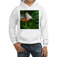 .swallowtail on candy lily. Hoodie
