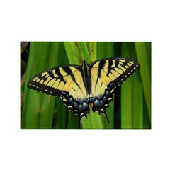 .eastern swallowtail butterfly. Rectangle Magnet (