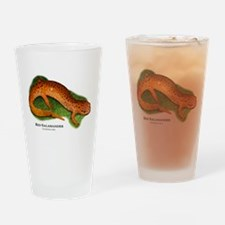 Red Salamander Drinking Glass