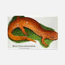 Red Salamander Rectangle Magnet