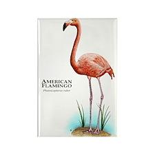 American Flamingo Rectangle Magnet