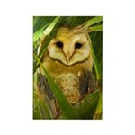 Palm Tree Owlet Rectangle Magnet