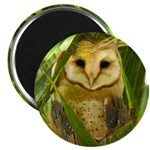 Palm Tree Owlet Magnet