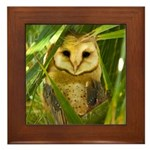 Palm Tree Owlet Framed Tile