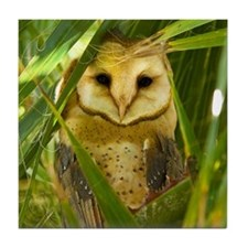 Palm Tree Owlet Tile Coaster