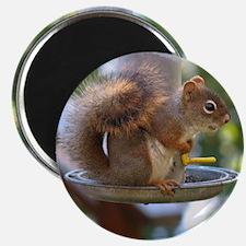 Red Squirrel I Magnet