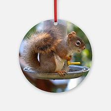 Red Squirrel I Ornament (Round)