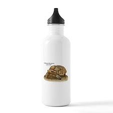 African Spurred Tortoise Water Bottle