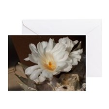 white cactus flower Greeting Cards (Pk of 10)
