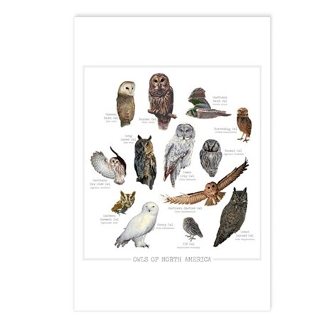 Owls of North America Postcards (Package of 8)