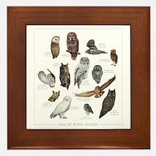 Owls of North America Framed Tile