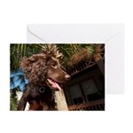 Boykin Spaniel Puppy Greeting Cards