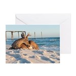 Deer Relaxes on the Beach Greeting Cards