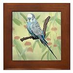 Blue Parakeet or Budgie Framed Tile