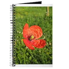 Single Red Poppy Journal