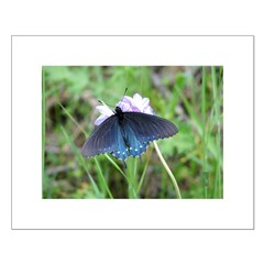 Blue Butterfly Posters