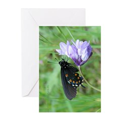 Butterfly & Brodaiea Greeting Cards (Pk of 10)