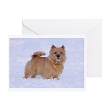 """""""Norwich Terrier 2"""" Greeting Card"""