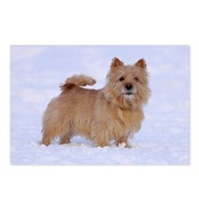 """Norwich Terrier 2"" Postcards (Package of 8)"