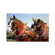 Belgian Horse Rectangle Magnet