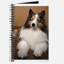 All Sheltie Journal