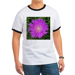 .stoke's aster. T