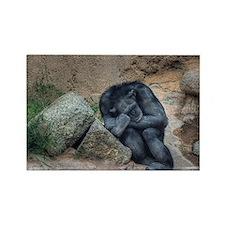 Chimpanzee In Repose (ABQ) Rectangle Magnet