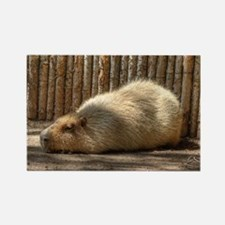 Naptime! Rectangle Magnet (100 pack)